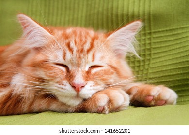 young ginger stripped siberian cat sleeping with eyes closed - on green