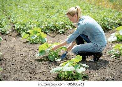 Young girl agronomist planting new plant