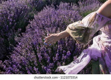 A young girl in a beautiful, airy, festive dress walks the lavender field and strokes her hand with lavender. The nails on the hand are painted with blue lacquer.