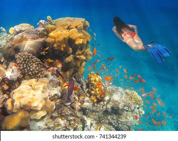 young girl in bikini swims underwater amid the beautiful coral and colorful tropical fish in Red Sea, Eilat, Israel