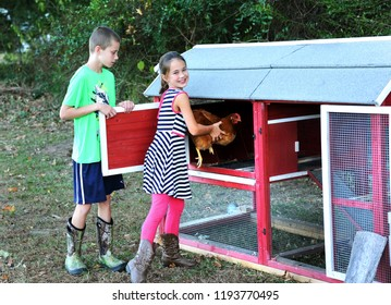 Young girl and boy lock chickens up for the night to protect them.  Girl is looking and smiling while putting a chicken inside. Boy holds door.