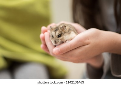 A young girl cradling an adorable hamster in her hands.