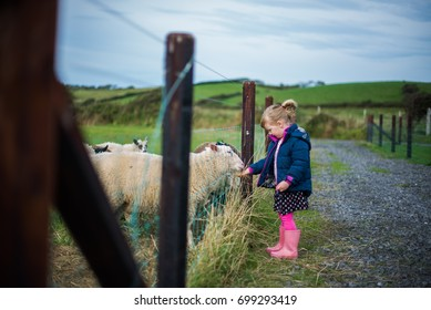 A young girl feeds the sheep on a farm.