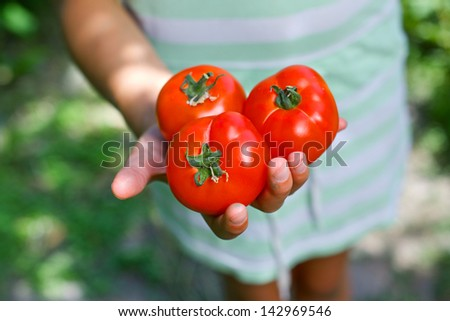 Young girl hand holding organic green natural healthy food produce tomatoes