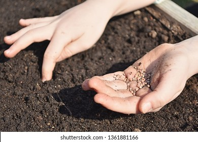 Young girl hands with seeds, planting radish seeds in soil outdoor on sunny day, close up view.