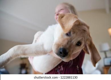 Young girl holding cute yellow labrador retriever puppy with flo