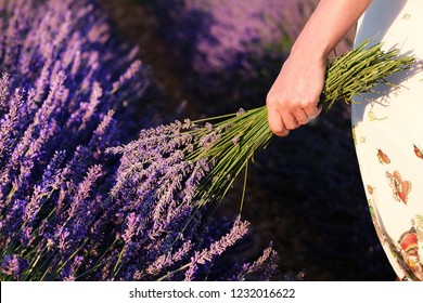 Young girl in the lavander fields. Provance, France.