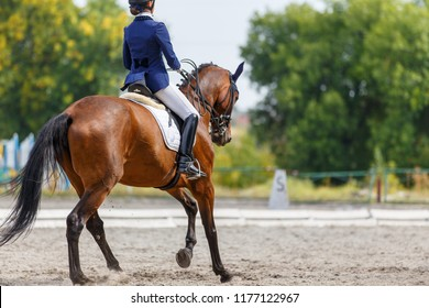 Young girl on bay horse performing her dressage test