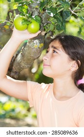 Young Girl Picking an Green Apple from a Tree.