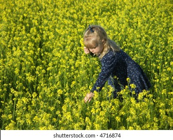 Young girl picking yellow flowers in a field.