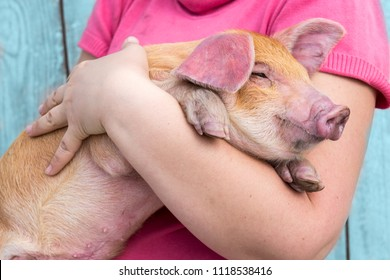 Young girl in pink sweatshirt is holding red pig. Concept of animal health, love of nature, respect for world and love for animals. Ecologic, biologic, vegan, vegetarian style