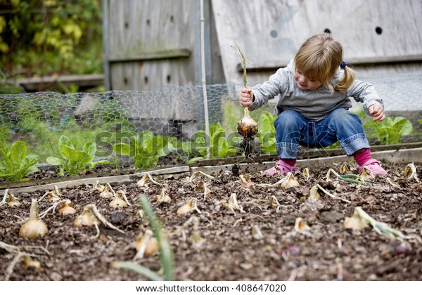 A young girl pulling up onions on an allotment