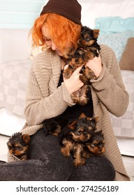 Young girl with a puppy of Yorkshire terrier. Beautiful reddish haired young woman holding a group of small terrier puppy York. Woman and puppy dog house in the room. Many puppies a woman in his arms.