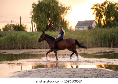 A young girl riding a horse on a shallow lake. A horse runs on water at sunset. Care and walk with the horse. Strength and Beauty.