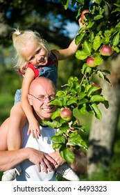 Young girl sitting on the should of her daddy picking an apple from a tree