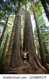 Young girl stands in the middle of a group of trees along the Lady Bird Johnson Grove Trail in the California Redwoods National Park in coastal Northwest California.