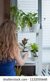 Young girl take care about homeplants