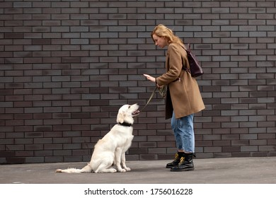 young girl trains a golden retriever puppy on a city street, a woman walks with a dog on the background of the wall