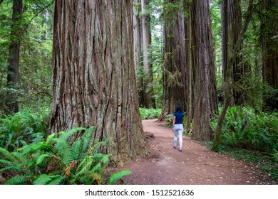 Young girl walking on trail in between massive redwood trees in Northern California forest - Jedediah Smith Redwoods State Park, California, USA