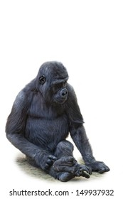 Young gorilla, it is isolated, a white background
