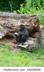 young gorilla on tree