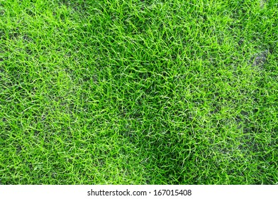 young grass background