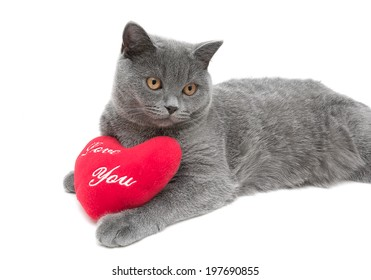 Young gray cat close-up on white background. horizontal photo.