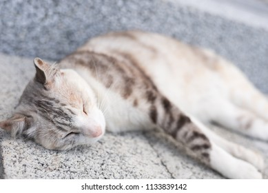young gray cat sleep on the ground