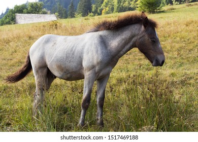 Young Gray Dappled Horse Standing in the field