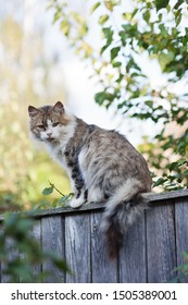 Young gray and white cat sitting on the fence