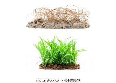 Young green grass growing out of the ground ,and dry grass on pile soil isolated on white background