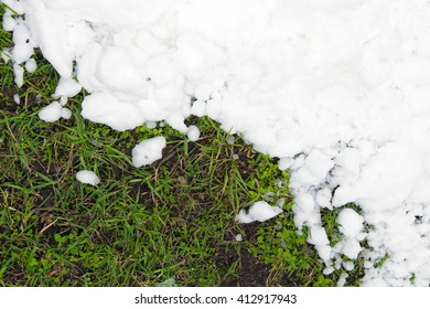 Young green grass and the pure white snow (background). Global warming