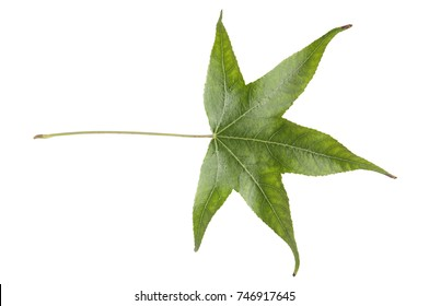 Young green leaf plant tree from garden isolated on white background