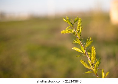 Young green leaves on the bush in spring day