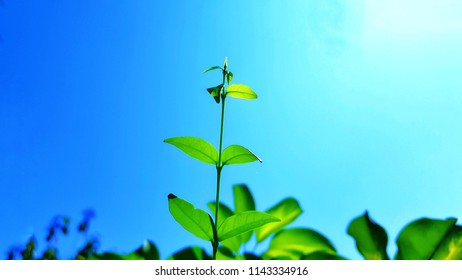 young green plant with blue sky in the nature