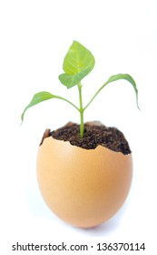 Young green plant grow in eggshell isolated on white background. Development, new life, birth or revival concept.