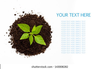 Young green plant isolated on a white background with space for text