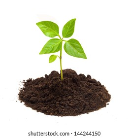Young green plant isolated on a white background