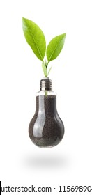 young green plant in a light bulb isolated on white background,green energy concept