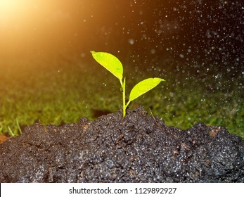 Young green plant in soil with water drop on leaf on nature background