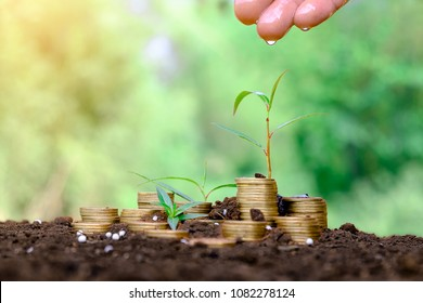Young green plant and watering with stack golden coin on ground for growing business financial concept.