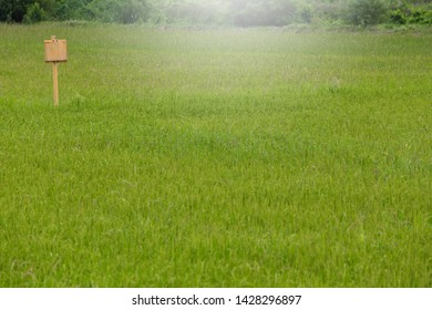 Young green ruce paddy field  - Shutterstock ID 1428296897