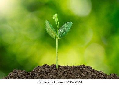 Young green sprout with water drop growing out from soil isolated on blurred green bokeh background, environmental concept