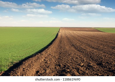 young green wheat and plowed field landscape autumn season