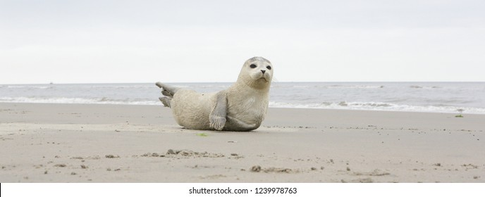 A young grey seal pup that's a total show-off, one with something of an outgoing personality, and who just seems to play to the camera. North and Wadden sea. Dutch.