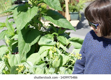 young grounded smiling child with sunglasses looking at a homegrown mustard plant on a city balcony or street, daylight