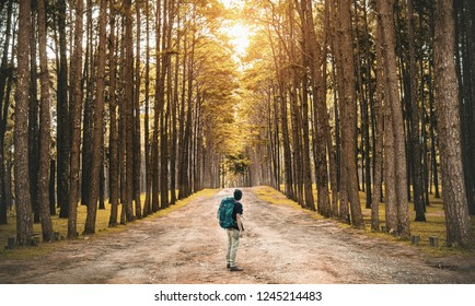 A young guy with a backpack traveler standing in the woods. Back view