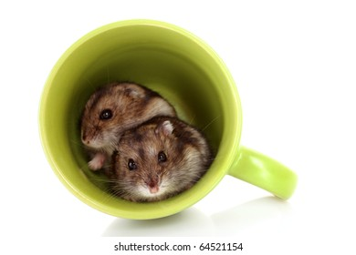Young hamsters in green cup isolated on white