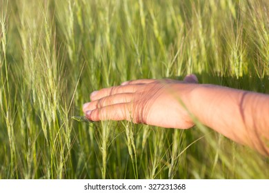 young hand and grass