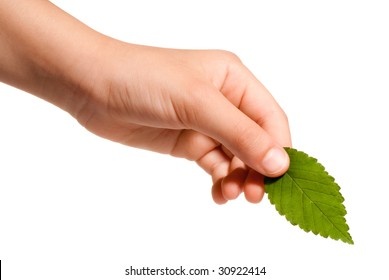 young hand holding a green leaf